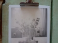 Polaroid transience